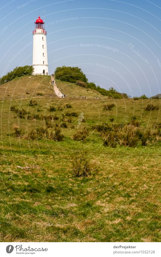 Well visible: Lighthouse at Hiddensee Leisure and hobbies Vacation & Travel Tourism Trip Adventure Far-off places Freedom Environment Nature Landscape Plant