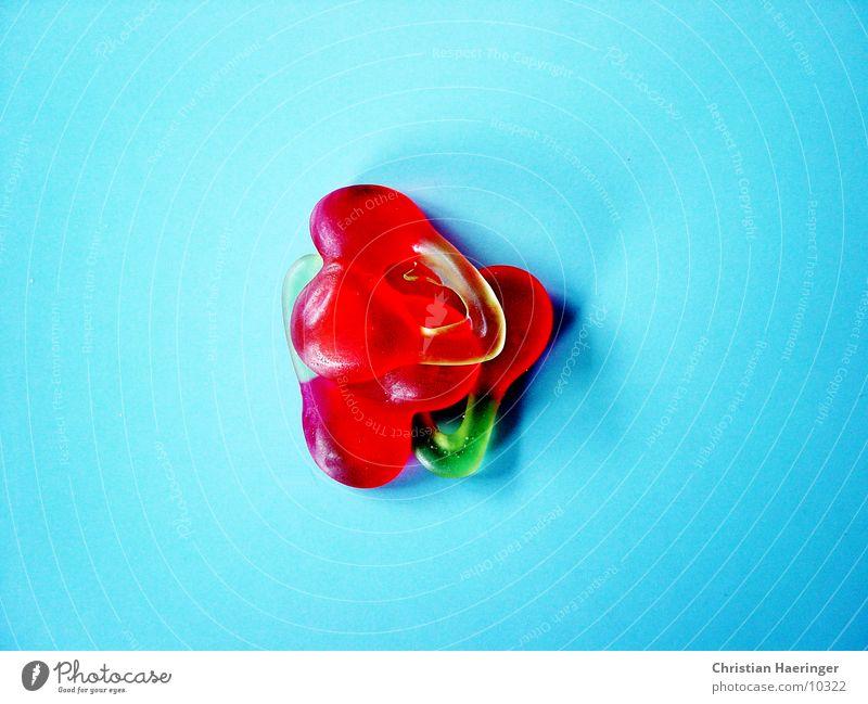 three cheerful cherries Cherry Gummy bears Green Red Wine gum happy cherries Blue