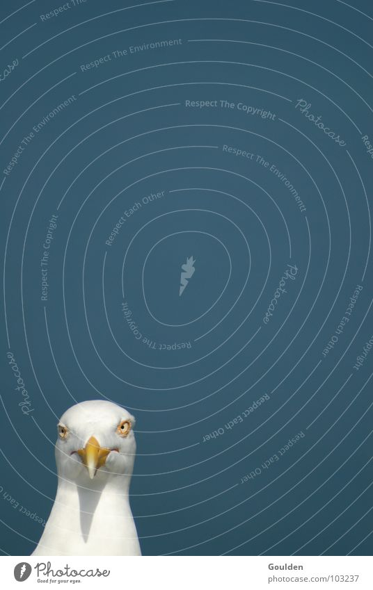 Nature Sky White Ocean Blue Beach Vacation & Travel Eyes Animal Relaxation Air Bird Wait Funny Target Observe