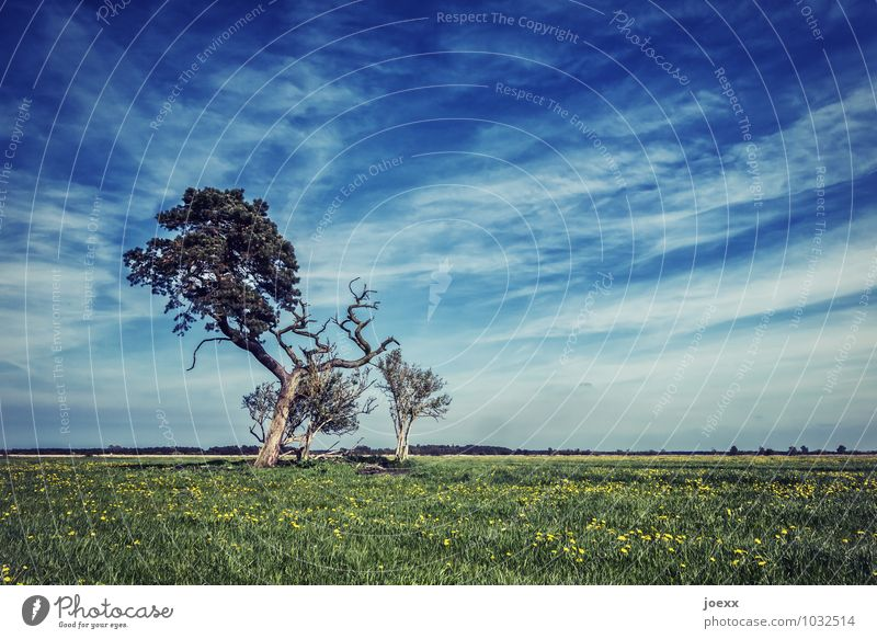 half-death Landscape Sky Clouds Horizon Beautiful weather Tree Meadow Infinity Blue Brown Green Calm Far-off places Colour photo Subdued colour Exterior shot