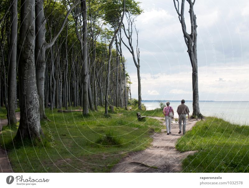 Human being Vacation & Travel Old Green Summer Ocean Forest Senior citizen Lanes & trails Going Couple Together Tourism 60 years and older Trip To go for a walk