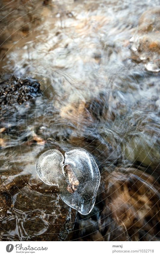 There my heart melts away Life Harmonious Relaxation Calm Valentine's Day Water Winter Ice Frost Brook Heart Authentic Simple Fluid Wet Natural Heart-shaped