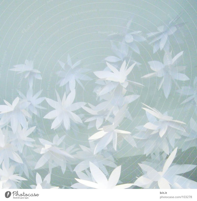 FLOWERPOWER III Winter Decoration Feasts & Celebrations Valentine's Day Mother's Day Birthday Art Spring Ice Frost Flower Blossom To fall Bright Cold Blue White