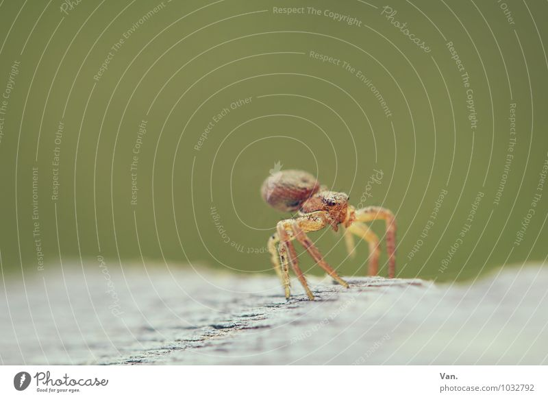 Dancing pleasing?² Nature Animal Wild animal Insect Spider 1 Wood Yellow Green Colour photo Subdued colour Exterior shot Close-up Macro (Extreme close-up)