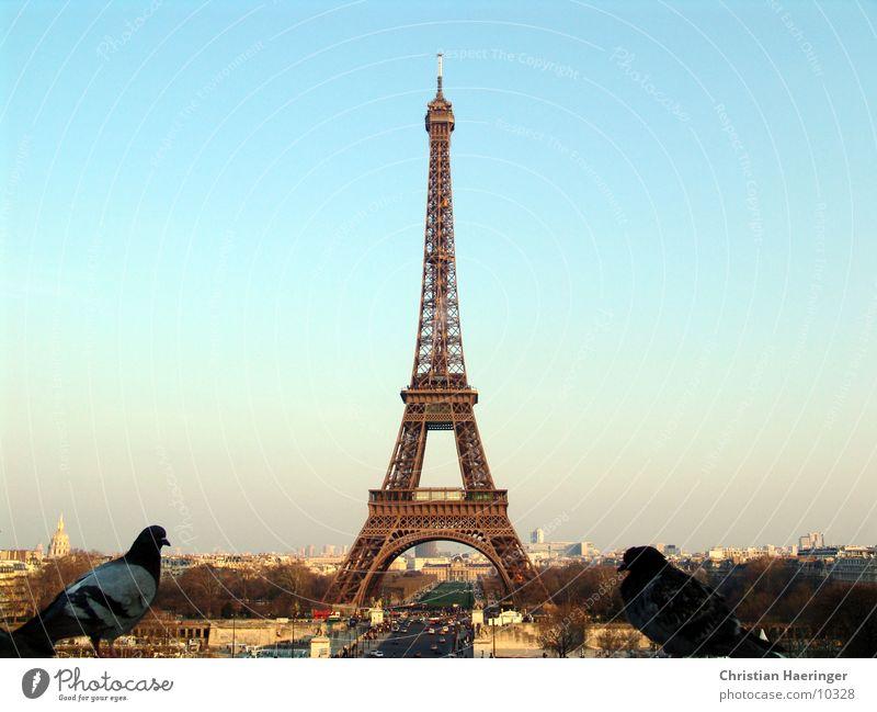 City House (Residential Structure) Bird Horizon Europe Paris Skyline France Pigeon Eiffel Tower