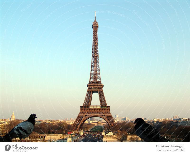 two pigeons Paris France Eiffel Tower Bird Pigeon Town House (Residential Structure) Skyline Horizon Europe