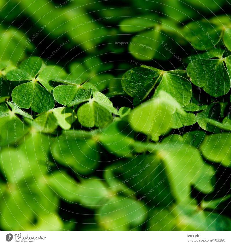 Nature Green Plant Natural Happy Symbols and metaphors Botany Alternative medicine Clover Medicinal plant Cloverleaf Good luck charm Popular belief