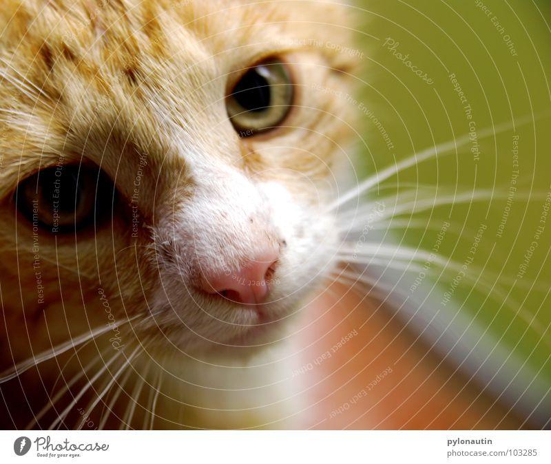 White Green Plant Animal Garden Cat Orange Ear Pelt Statue Mammal Armchair