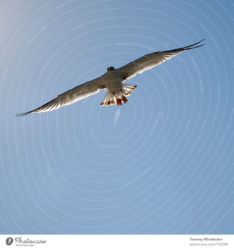 Mövenpic III Seagull Bird Sky blue Peace Summer Ocean Lake Hover Sailing Low-flying plane Ease Light heartedness Foraging Aviation Airworthy Beach Infinity Free
