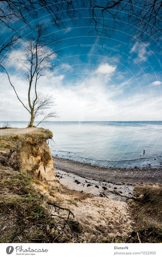 outlook Body 1 Human being Nature Landscape Elements Earth Sand Sky Clouds Horizon Winter Beautiful weather Plant Tree Grass Coast Beach Baltic Sea Ocean Blue