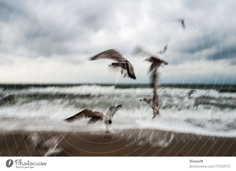 flapping Animal Wild animal Bird Group of animals Flock Blue Brown White Abstract Seagull Coast Beach Wind Waves Colour photo Subdued colour Exterior shot