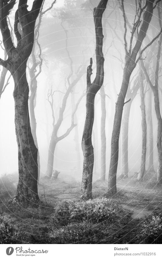 ghost forest Beach Ocean Sand Spring Climate Weather Fog Tree Grass Forest Baltic Sea Gray Black White Ghost forest Black & white photo Exterior shot Deserted