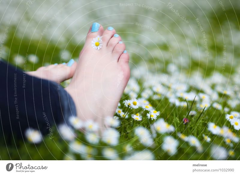 pure relaxation Lifestyle Young woman Youth (Young adults) Adults Legs Feet Toes Toenail 1 Human being 18 - 30 years Nature Plant Summer Beautiful weather