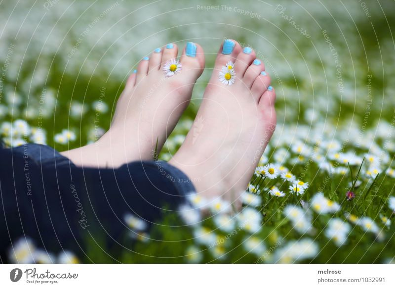 Pure relaxation II Lifestyle Feminine Young woman Youth (Young adults) Adults Legs Feet Toes toenails Barefoot 18 - 30 years Nature Summer daisy meadow Daisy