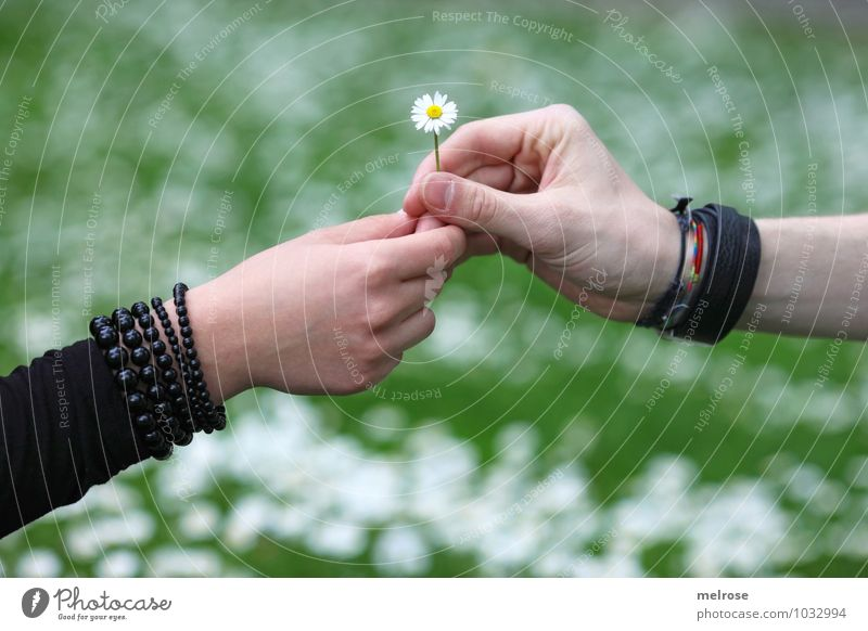 I Love You Valentine's Day Young woman Youth (Young adults) Young man Couple Partner Hand Fingers 2 Human being 18 - 30 years Adults Nature Plant Spring Flower