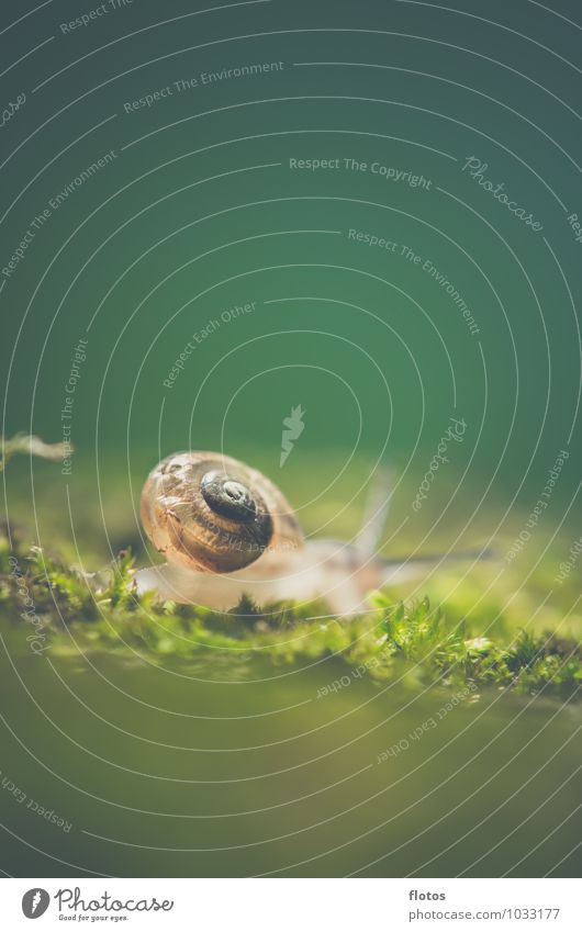 A house in the green Animal Wild animal Snail Near Natural Slimy Brown Green Nature Colour photo Exterior shot Close-up Detail Deserted Copy Space top Day