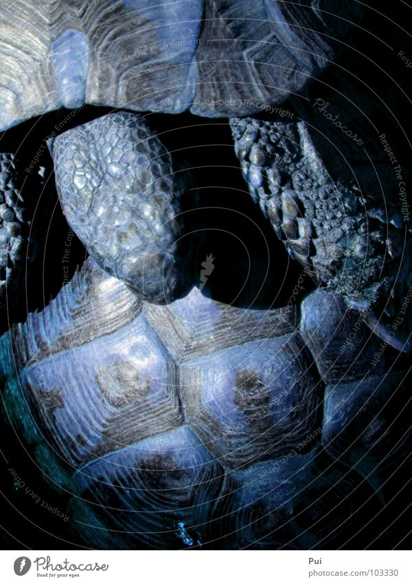 Nature Blue Animal Dark Turtle Armor-plated