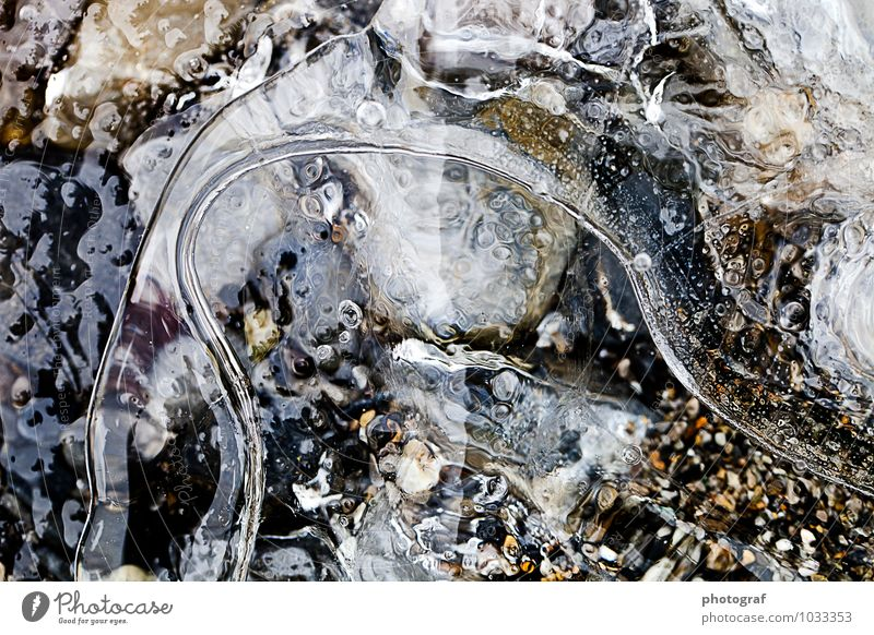 ice Life Air Water Winter Ice Frost Growth Fresh Cold Natural Nature Frozen Ice crystal Ice droplets ice bubble Colour photo Exterior shot Close-up Detail