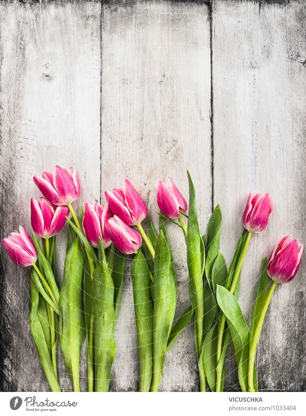 Pink tulips on white wooden wall Style Design Garden Decoration Feasts & Celebrations Valentine's Day Mother's Day Birthday Nature Plant Spring Summer Flower