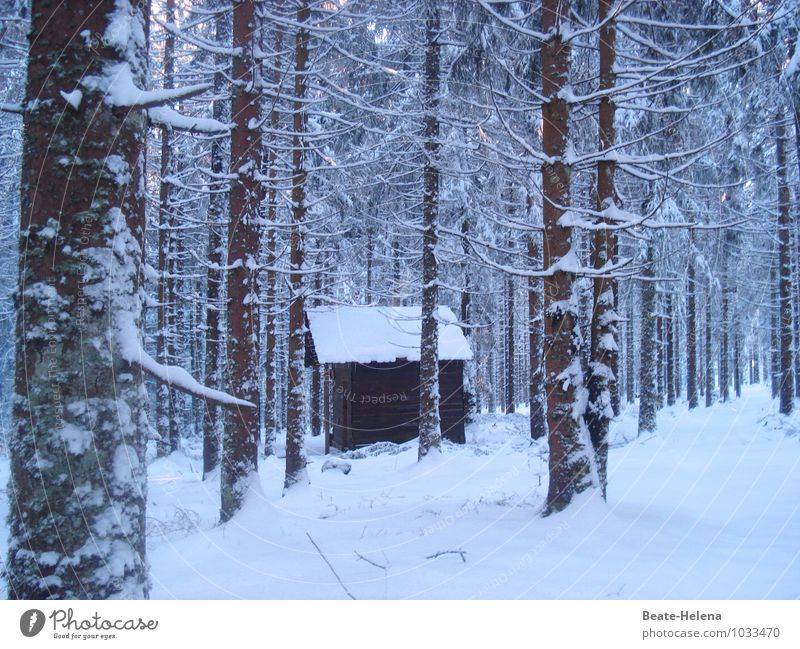 hut magic Winter Snow Winter vacation Living or residing House (Residential Structure) Dream house Environment Nature Landscape Ice Frost Tree Virgin forest