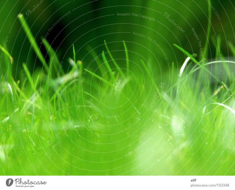 ...grow Green Growth Macro (Extreme close-up) grass Nature intact world vista windows