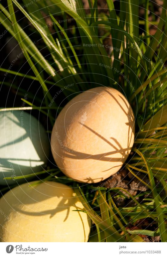 soft easter nest Candy Trip Garden Feasts & Celebrations Easter Nature Spring Beautiful weather Warmth Grass Park Meadow Discover Curiosity Soft Yellow Orange