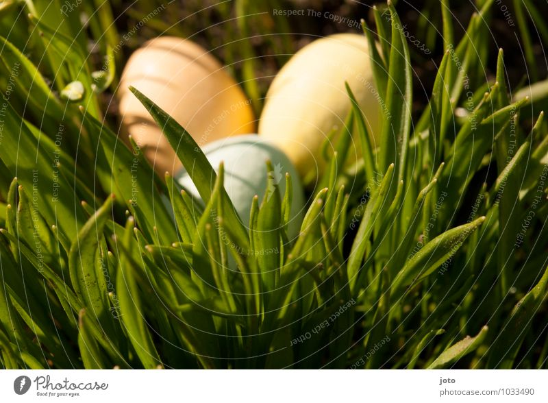 found it! Trip Easter Nature Spring Beautiful weather Grass Garden Park Meadow Curiosity Warmth Yellow Orange Surprise Easter egg Easter egg nest Easter wish