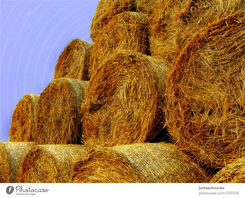 The work wage Straw Bale of straw Hay bale Field Working in the fields Stack Summer Autumn Yield Agriculture Harvest bundled hay Mow the lawn Juttas snail