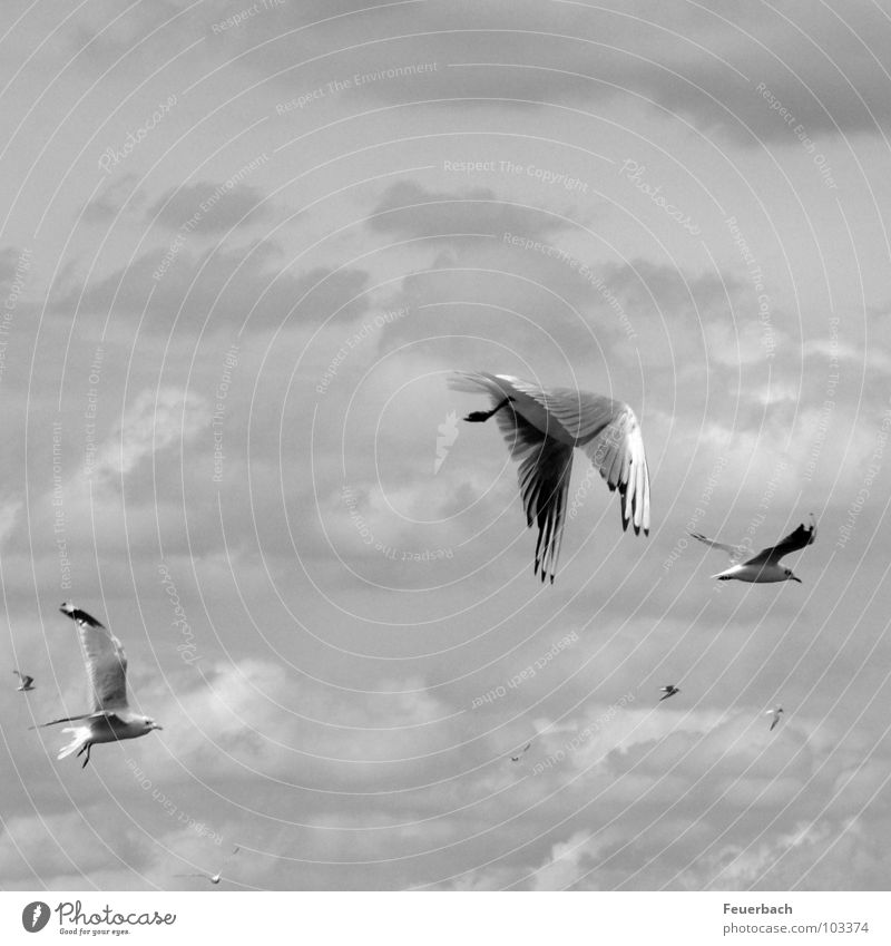 Nature Sky White Ocean Vacation & Travel Black Clouds Animal Cold Freedom Gray Lake Air Bird Wind