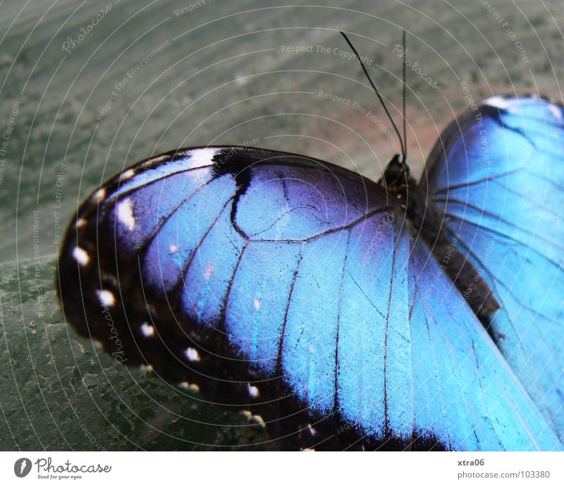 Blue Summer Black Life Wood Gray Small Jump Heart Illuminate Wing Delicate Insect Butterfly Feeler Flashy