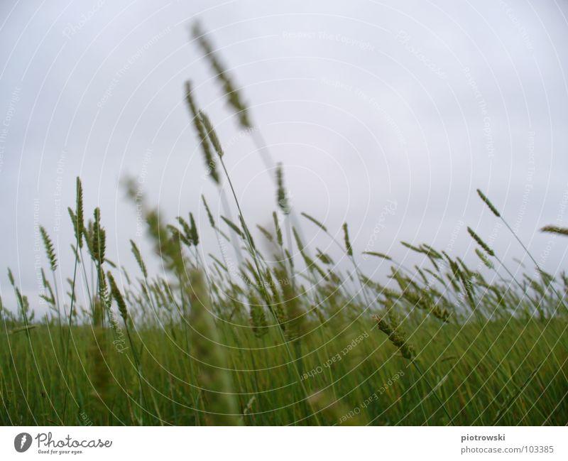 Sky Ocean Clouds Grass Gray Wind Beach dune North Sea