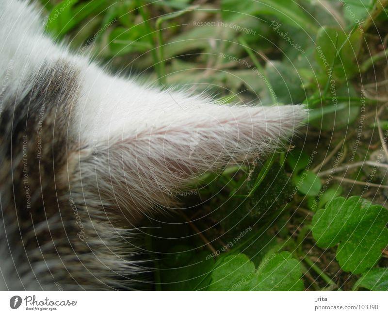 White Green Black Meadow Grass Cat Sleep Lie Ear Pelt Listening Watchfulness Mammal Domestic cat