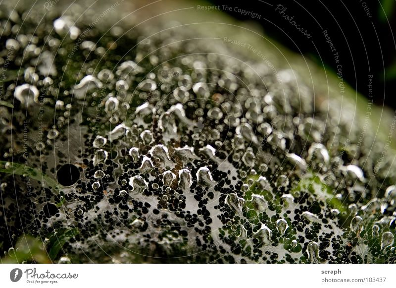 Water Dark Grass Background picture Rain Drops of water Wet Rainwater Net Fluid Blade of grass Dew Spider's web Liquid Pearl necklace