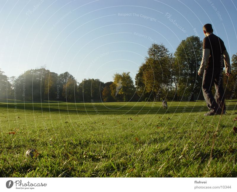 Catch Me If You Can Dog Man Grass Park Tree Weimar Meadow Autumn Afternoon Physics joya willy frisby. sun. Warmth