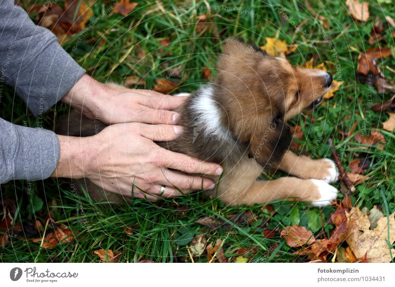 Dog Man Hand Calm Animal Adults Baby animal Emotions Small Friendship Together Growth Touch Protection Safety To hold on