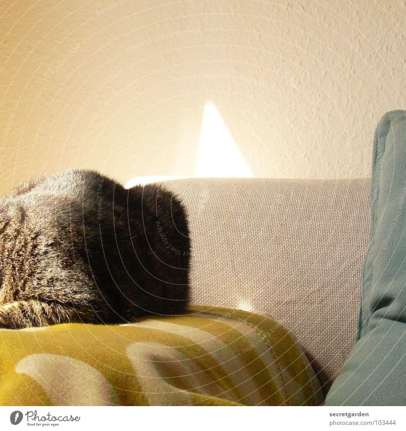 Cat Green Sun Relaxation Calm Warmth Gray Lie Room Living or residing Cloth Wrinkles Furniture Sofa Material Hang
