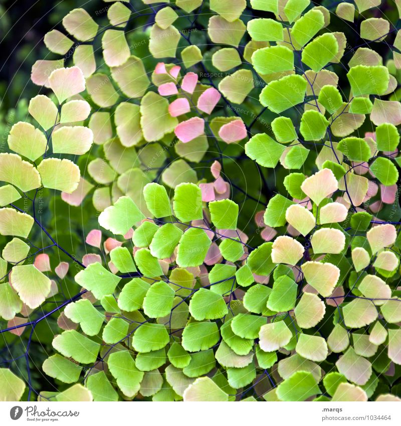 Nature Plant Beautiful Green Leaf Environment Yellow Life Garden Pink Esthetic Exotic Foliage plant