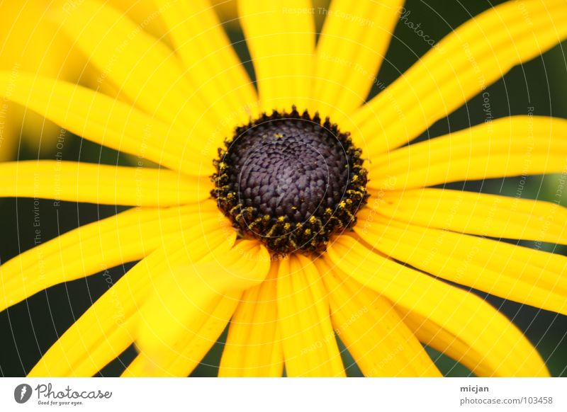 Nature Beautiful Flower Green Plant Summer Joy Yellow Colour Blossom Spring Brown Lighting Background picture Star (Symbol) Happiness