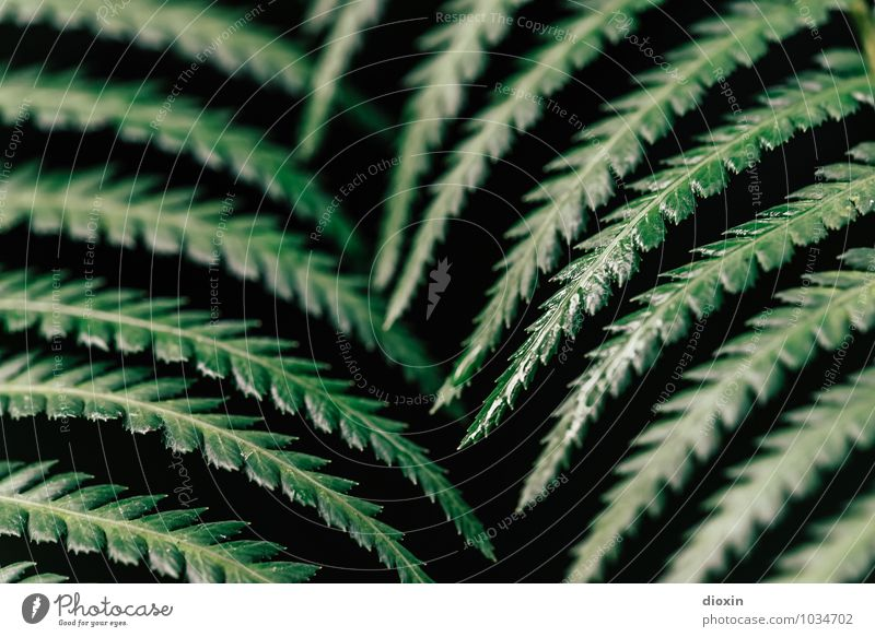 no deflection! Environment Nature Plant Fern Leaf Foliage plant Forest Virgin forest Growth Natural Colour photo Close-up Detail Deserted Blur