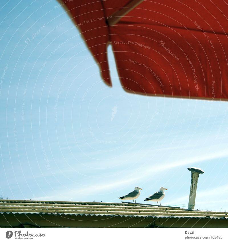 het meeuwtje   de meeuwtjes [p] Relaxation Vacation & Travel Summer Summer vacation Animal Sky Sunlight Beautiful weather Roof Chimney Bird 2 Pair of animals