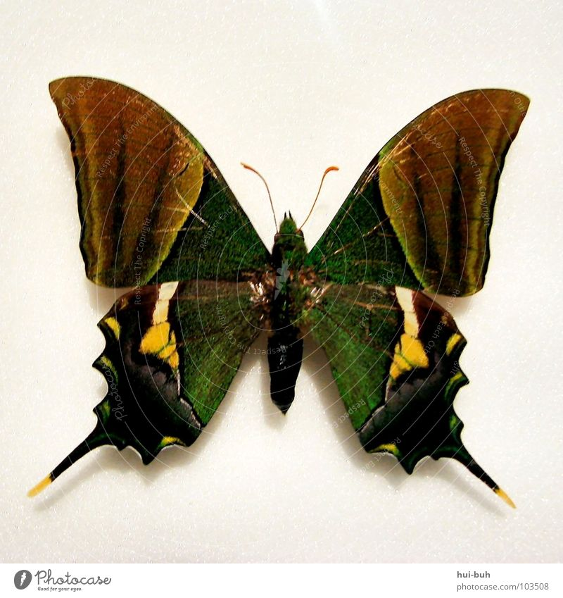 Green Beautiful Colour Freedom Emotions Air Flying Wing Point Insect Butterfly Museum Curve Feeler Sheath Animal