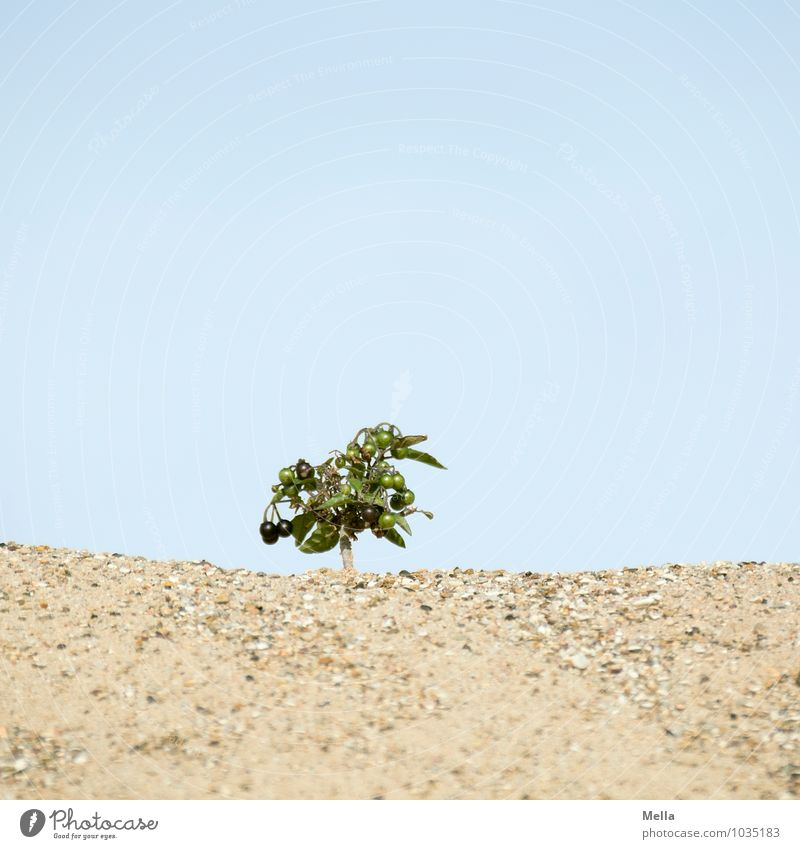 Sky Nature Plant Tree Landscape Environment Natural Small Sand Growth Fruit Earth Bushes Perspective Large Dry