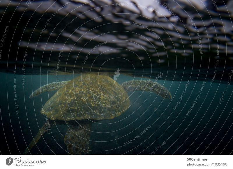 water turtle Vacation & Travel Aquatics Dive Water Waves Ocean Galapagos islands Animal Turtle Turles 1 Swimming & Bathing Adventure Surface of water
