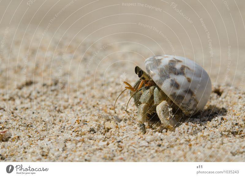 sunbath Animal Shellfish 1 Observe Relaxation Crawl Looking Exotic Bright Small Green Orange Joie de vivre (Vitality) Mussel shell Sandy beach Feeler Eyes