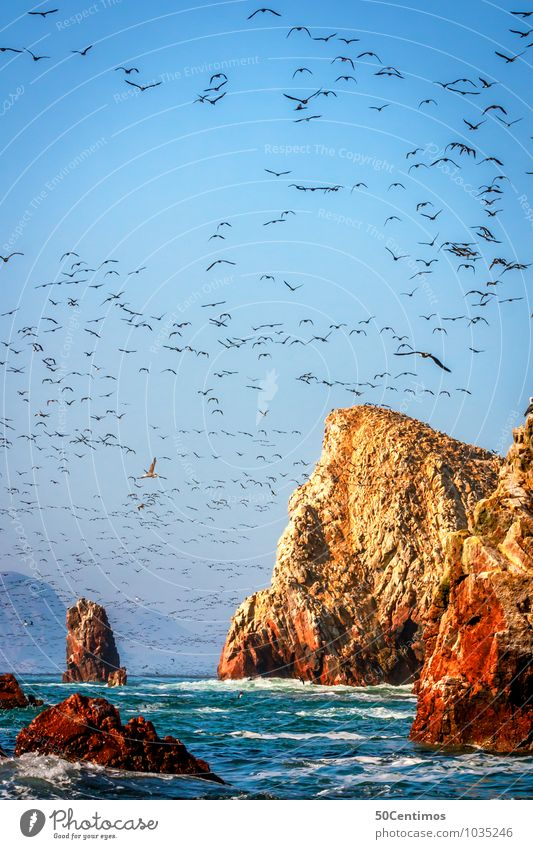 Birds fill the sky in Paracas National Park, Pisco Peru Far-off places Freedom Summer Ocean Island Environment Nature Landscape Sunrise Sunset Beautiful weather