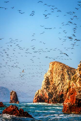 Nature Summer Ocean Landscape Animal Far-off places Environment Emotions Coast Freedom Moody Bird Rock Waves Authentic