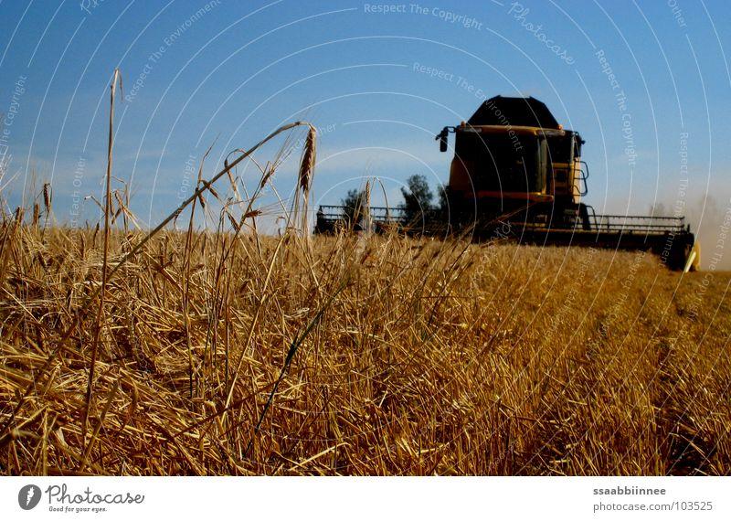 Soon done! Grain harvest Dust Stress Ear of corn Combine Summer Barley Field Stubble field Harvest Technology