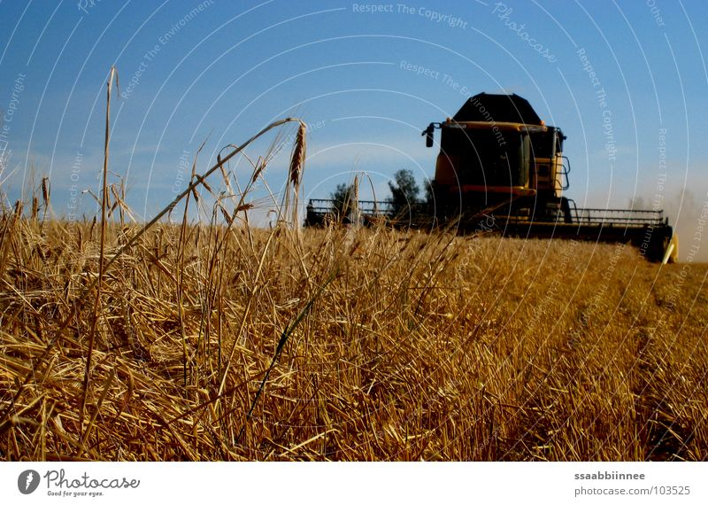 Summer Field Technology Stress Harvest Dust Ear of corn Barley Stubble field Combine Grain harvest