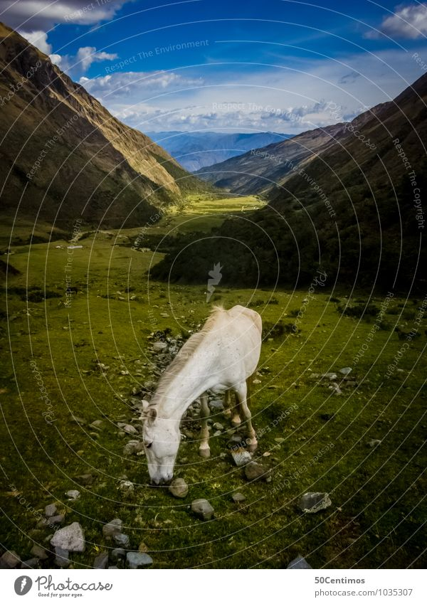 Nature Vacation & Travel Landscape Calm Animal Far-off places Mountain Meadow Grass Sports Freedom Moody Tourism Trip Beautiful weather Alps