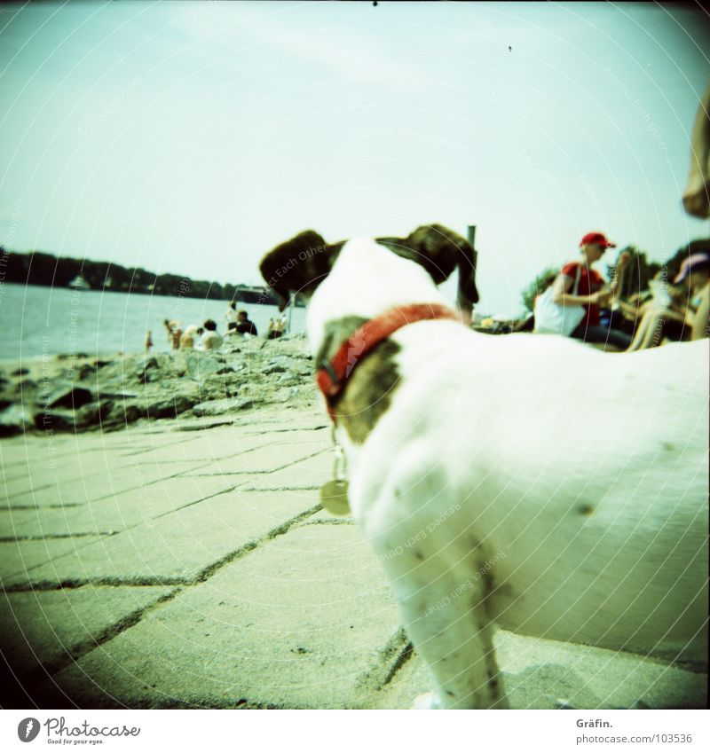 Who's looking? Dog Elbstrand Summer Beach Low tide Neckband Holga Stone slab Populated Clouds Watercraft Animal Mammal Lomography Coast Elbe Sand beach bead